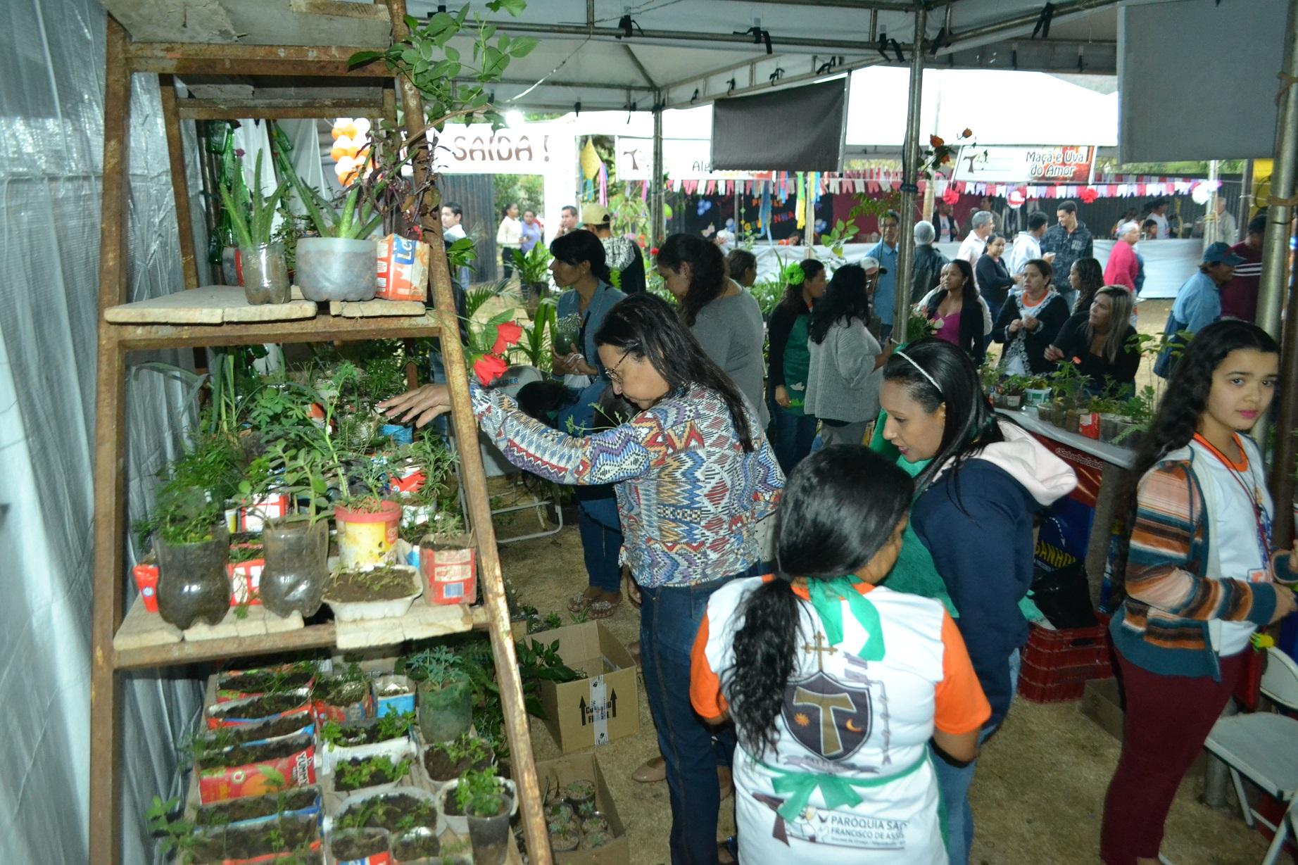 Barraca de venda de plantas: oportunidade única para enfeitar a casa gastando pouco [Foto: Euclides Oliveira]